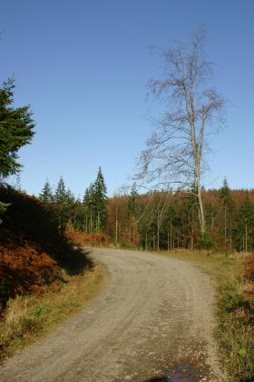 Road thro Mabie forest