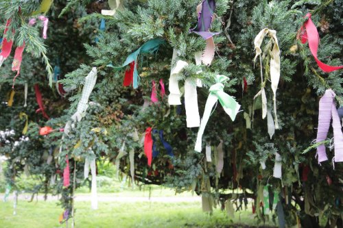 The prayer Tree Prayer tree at Samye Ling